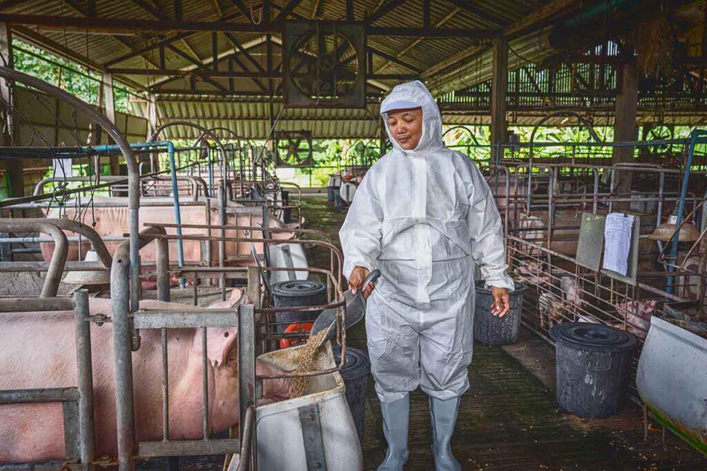 donna in allevamento di maiali
